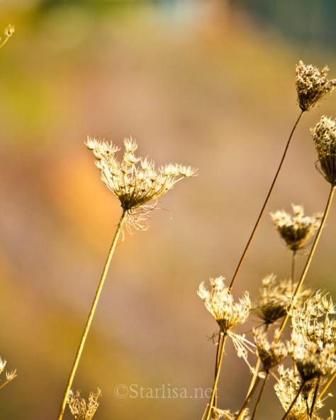 AutumnBokeh_4045-2-16