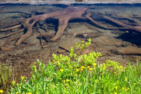 underwater stump relic looks like a creature in Bird Lake