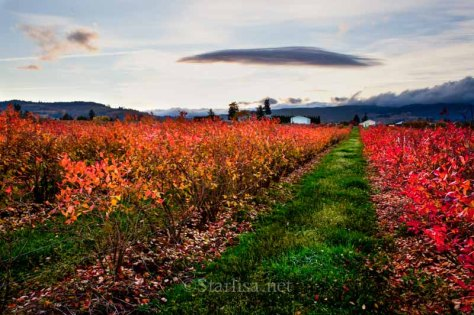 FallBlueberries_6975-12