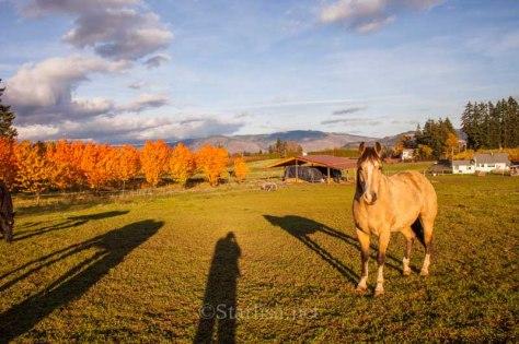 HoodRiver-Autumn-6930-4