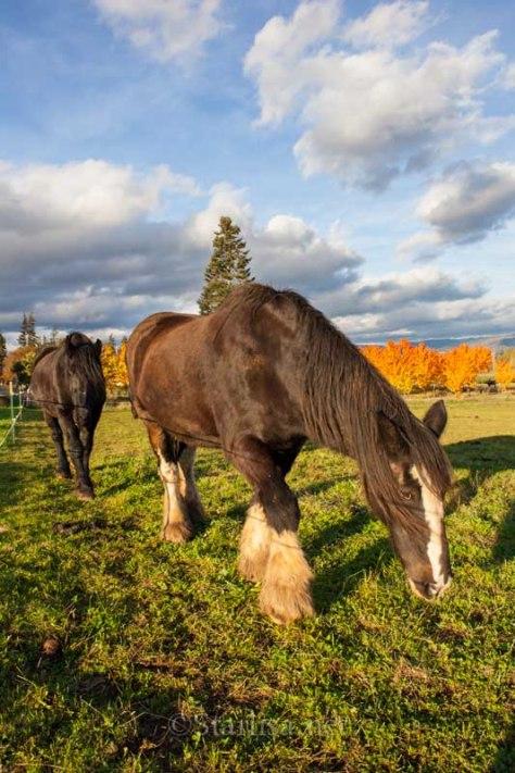HoodRiver-Autumn-6939-5