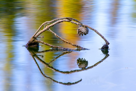 Reflection_MirrorLake_7443-3