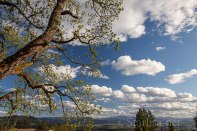 Trees&Clouds-0661-5