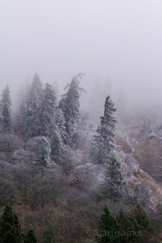 Fog&Frost_4716-1