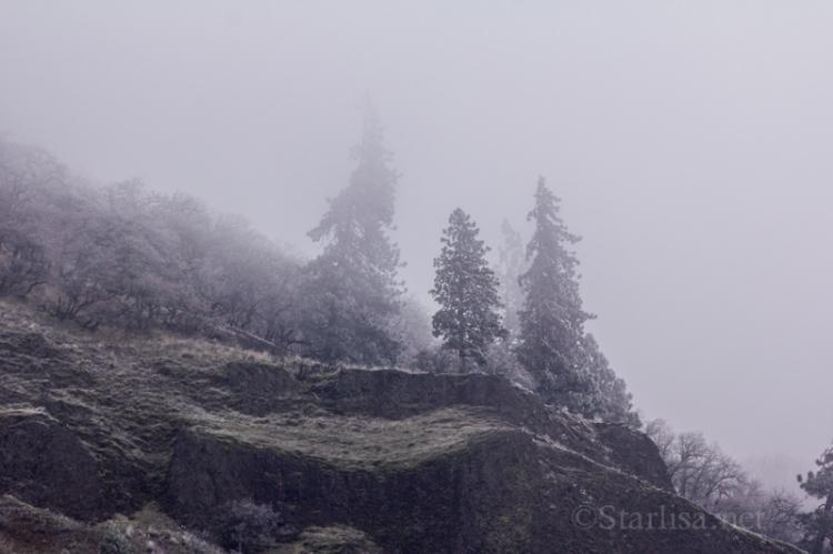 Frost&Fog_4719-2