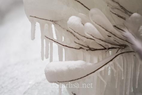 Ice_9521-1