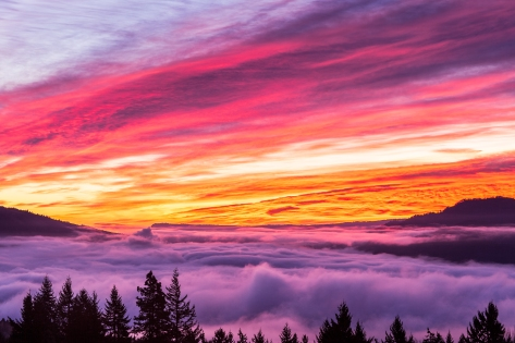 """Sunrise Glory above the Fog"" is a mid December 2013 brilliant pink and orange image taken looking East over the Columbia River covered with a thick layer of fog. This Triptych has been printed on Metal, and each panel is 16x24"" in size, giving a combined wall size of 50x24"".    For the Months of February and March this will be on display at North Shore Cafe in White Salmon, Washington with many other of my images.    CLICK ON THIS IMAGE TO SEE LARGER IN MY BEST GALLERY"