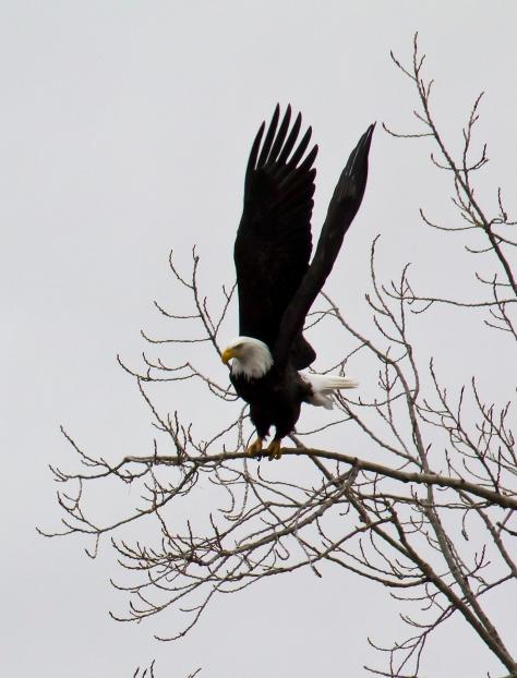 EaglesLyle2_7702-2-24