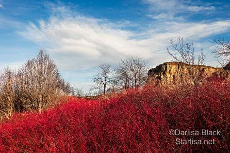 A rich Red Osier Dogwood foreground with a Lenticular Cloud and Horsethief Butte on Highway 14 in Washington make a grand backdrop. Click on this image to learn more about prints of this and other fine art