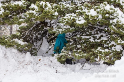 boy hides in snowy tree, but his coat shows through the branches