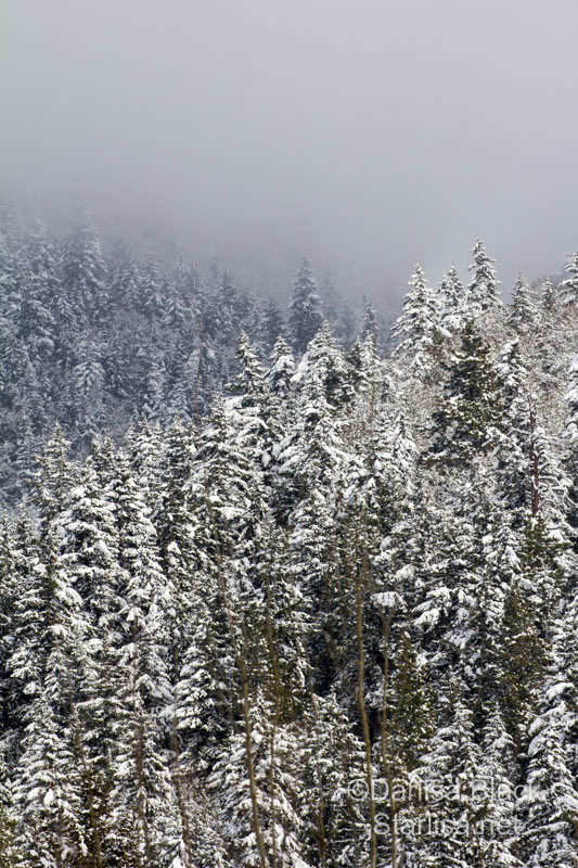 Snow covered trees on the hill above town