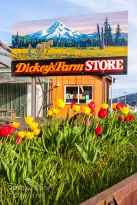 DickeyFarmStore_9800