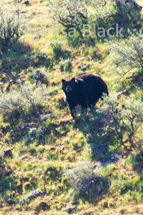 Wild Colt in Eastern Washington