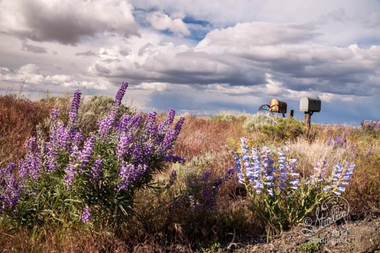 May28_Wildflowers-BickletonHwy-WM-5013