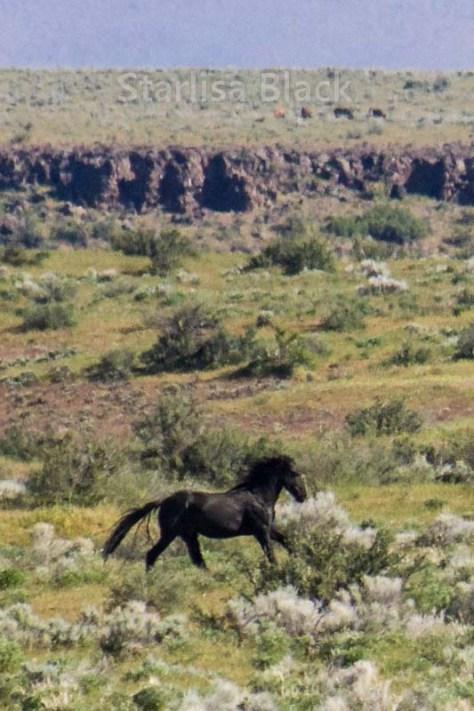 Wild Horse in Eastern Washington