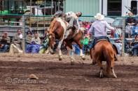 Ketchum Kalf Rodeo 7302