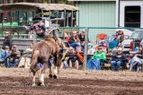 Ketchum Kalf Rodeo 7348