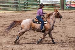 Ketchum Kalf Rodeo #7735