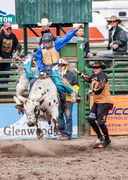 Ketchum Kalf Rodeo 7911-2