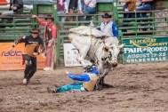 Ketchum Kalf Rodeo 7916