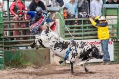 Ketchum Kalf Rodeo 7928-2