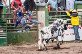 Ketchum Kalf Rodeo 7929