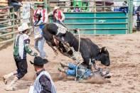 Ketchum Kalf Rodeo 8004