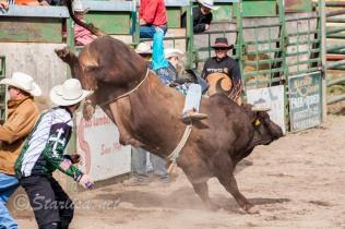 Ketchum Kalf Rodeo 8006