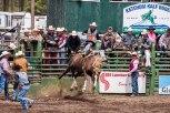 Ketchum Kalf Rodeo 7339
