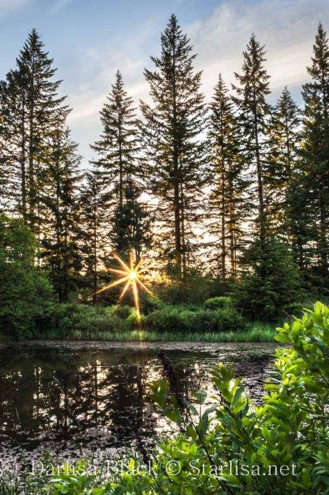 Sunstar over an old pond