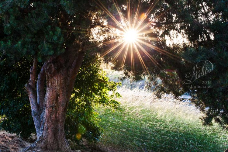 Light Delight