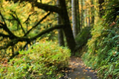SilverFallsPark-trail_3568
