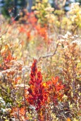 Autumn Glow Oct. 1, 2014