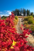 Cascade Foothill Autumn near Trout Lake, WA Oct. 1, 2014