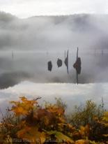Fog_1401