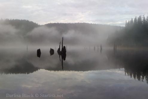 Fog_1439