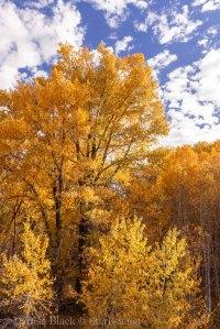 Idaho-Carey-Color-1