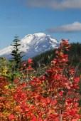 Mount Adams. Cascade Foothill Autumn near Trout Lake, WA Oct. 1, 2014