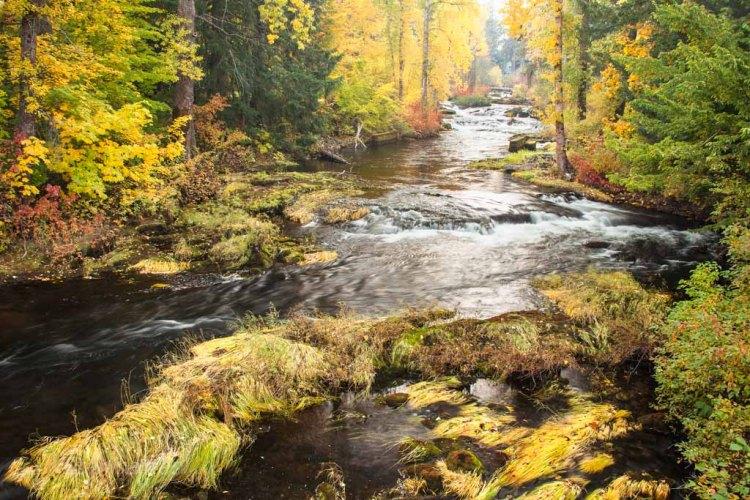Trout Lake Creek early Autumn