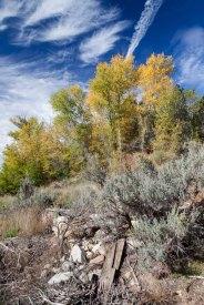 Utah-StevensHomestead-Dennis-Dee-7918