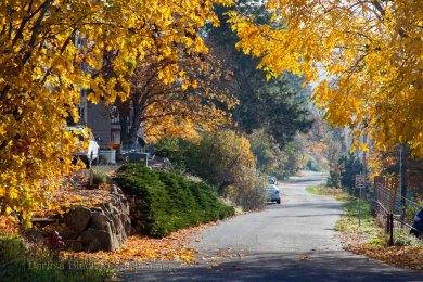 Autumn-Street-9784