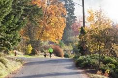 Autumn-Street-9792