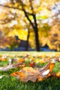 Autumn_in-WhiteSalmon_9931