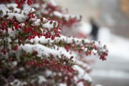 First-snow_0607