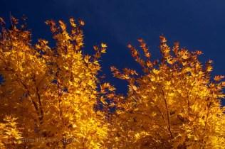 Yellow-&-Blue-9862