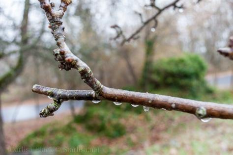 Freezing-Rain-3212