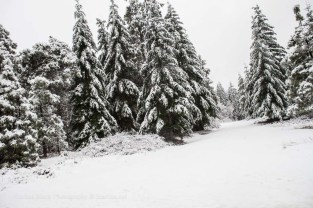Snow&Ice-3254