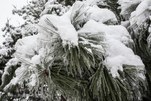 Snow&Ice-3259
