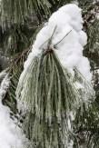Snow&Ice-crop-3263
