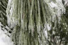 Snow&Ice-crop-3265